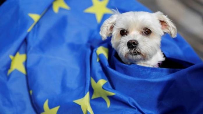 EU pet passports would not be valid for travel if the UK becomes an 'unlisted' country